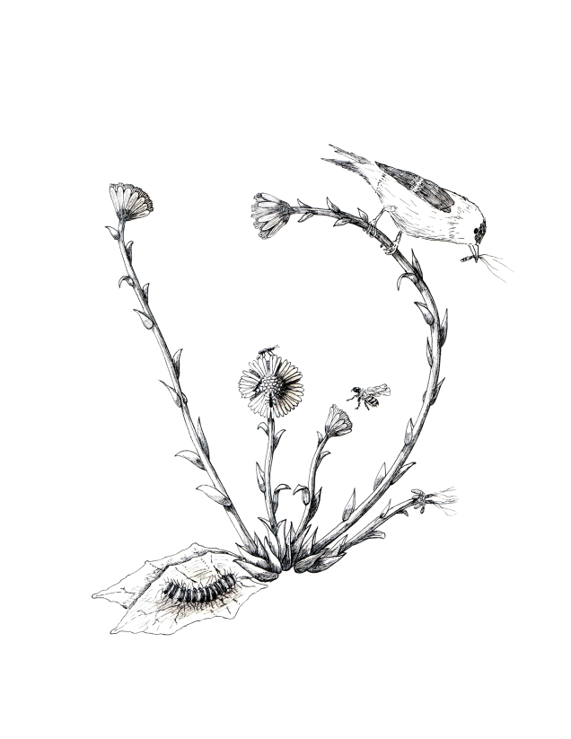 coltsfoot-with-animals